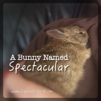 A Bunny Named Spectacular